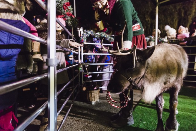 Meet Santa's Reindeer at the Edgbaston Lights Switch On